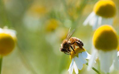Plan Biodiversité: de la parole aux actes