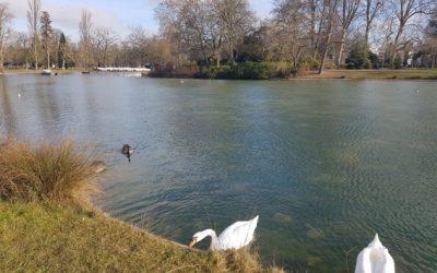 Ma contribution en l'enquête publique sur le projet de baignade du lac Daumesnil